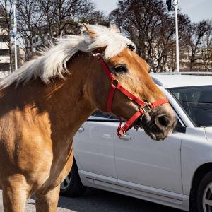 En man går med sin häst på gatan.