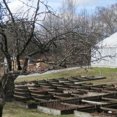 Stadsträdgårdens växthus i Jakobstad