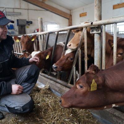 Fredrik Sandström, mjölkbonde i Nybränn, Purmo.