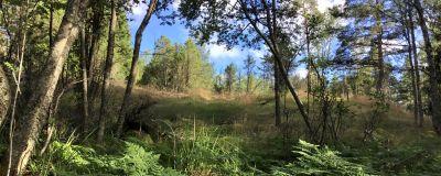 Ett skogslandskap, ett litet berg. Solen skiner, sommar, träd av olika slag, gräs och ormbunke, blå himmel.