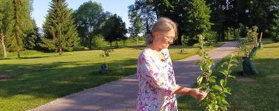 Kvinna håller i litet äppelträd i parkmiljö.