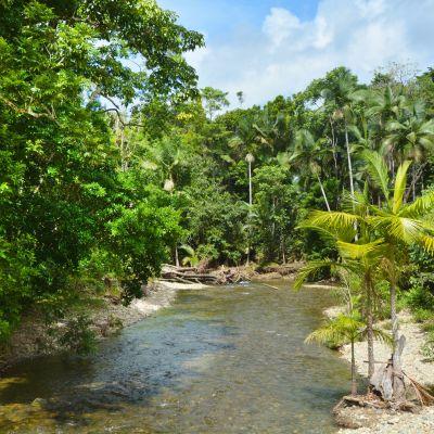 Vattendrag i regnskogsområdet Daintree i Queensland, Australien.