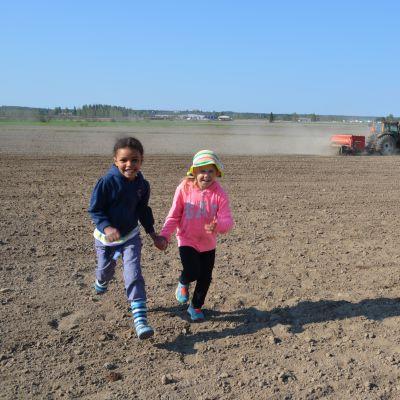 Maire Jinabo ja Lotta Kuusela pääsivät kylvämään omin käsin hernettä ja kauraa sekä traktorin kyydissä vehnää.