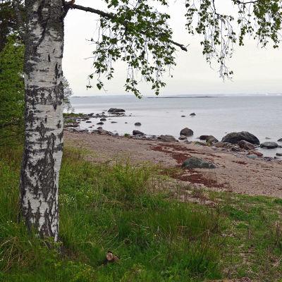 Sandstrand på Mjölö i Helsingfors