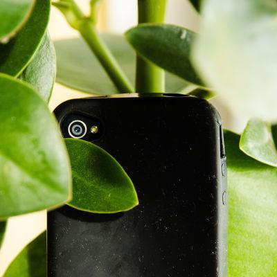 Kameratelefon dold i en blomkruka.