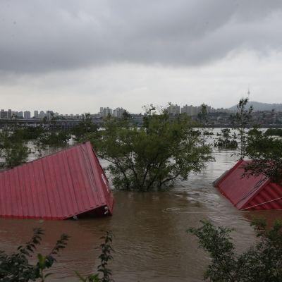 Kontit olivat lähtenee tulvaveden matkaan Han-joella Soulissa torstaina.
