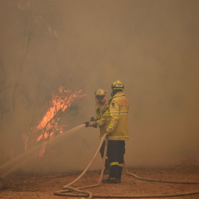 Brandmän släcker skogsbränder i New South Wales, Australien.