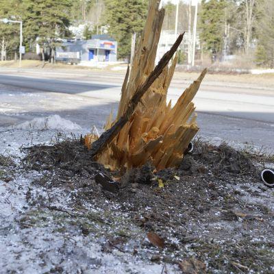 Jykevä puu meni säpäleiksi yhdistelmäajoneuvon törmäyksessä.