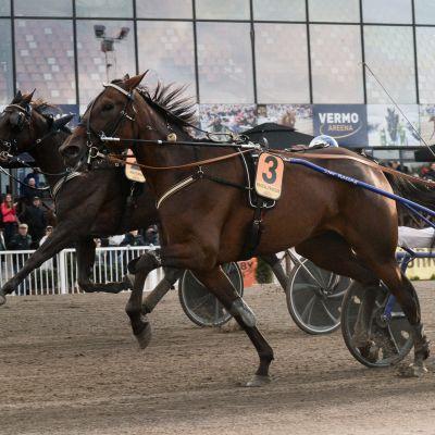 Pekka Korpi ja Magical Princess voittivat Suuren Suomalaisen Derbyn Vermossa.