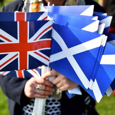 En motståndare till Skottlands självständighetsrörelse håller upp flaggor.