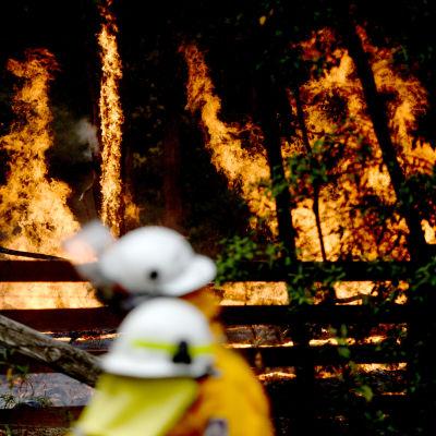 Kaksi palomiestä taustallaan liekeissä olevia puita.