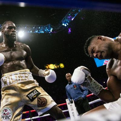 Deontay Wilder knockar Luis Ortiz.