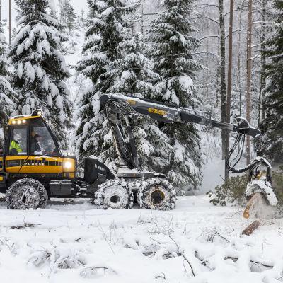 Metsäkone karsii puuta.