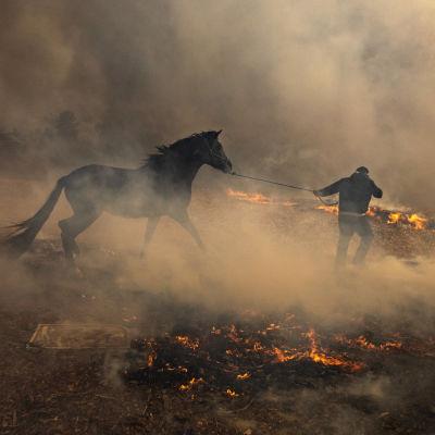 Mies kiskoo hevosta tulen ja savun ympäröimänä.