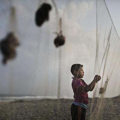 Flyttfåglar fångas med nät även i Gazaremsan. Bilden togs i Khan Younis 5.9.2013.
