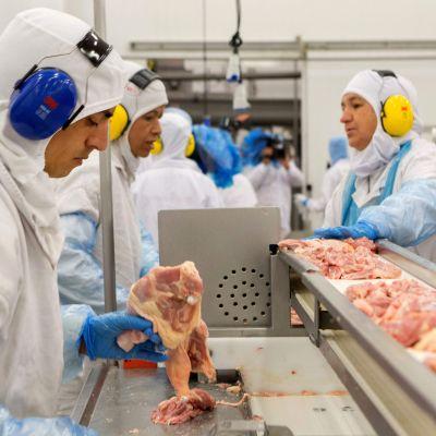 Fågelkött undersöks i Brasilien