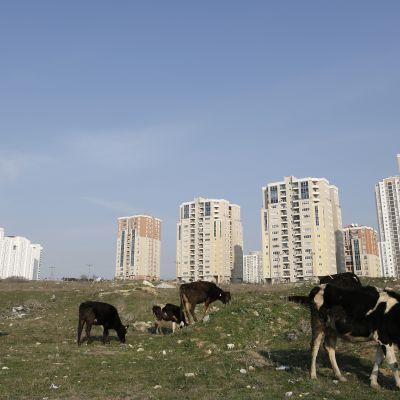 Nytt bostadsområde i Istanbul, stadsdelen Altinsehir