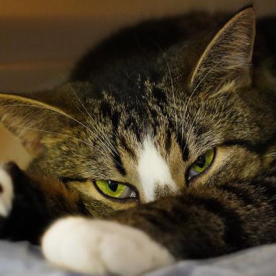 Kissatalon kissa