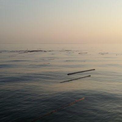 Tukkeja kelluu merellä.