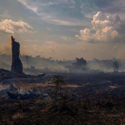 Nerbrunnet skogsområde i Brasilien.