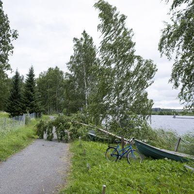 Omkullfallna träd på en väg i Joensuu där stormen Päivö dragit förbi.