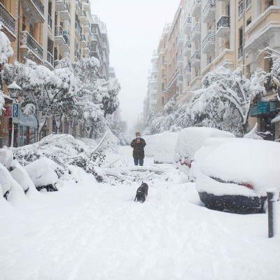 En man ute med sin hund på en snötäckt gata i Spaniens huvudstad Madrid. Träden, samt bilar och mopeder som står parkerade vid vägen, är täckta av ett tjockt lager snö.