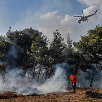 En brandman och en helikopter utför släckningsarbete i utkanten av den skog.