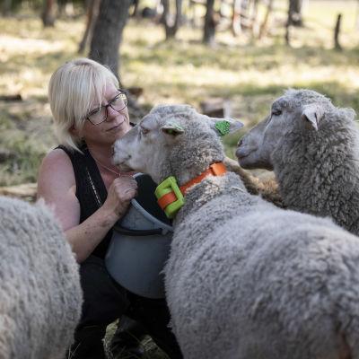 Saija Niemi-Erkkilä ruokkii lampaita.