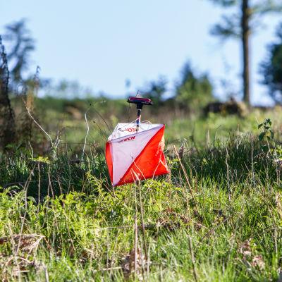 En orienteringskontroll i skogen.
