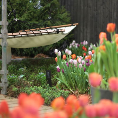 En hängmatta och tulpaner i en trädgård.