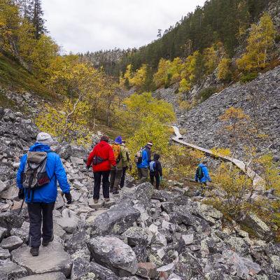 Retkeilijöitä Isokurun reitillä Pyhä-Luoston kansallispuistossa.