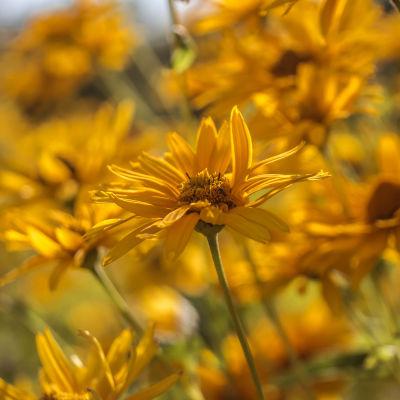 kukkia Marketan puistossa Espoo