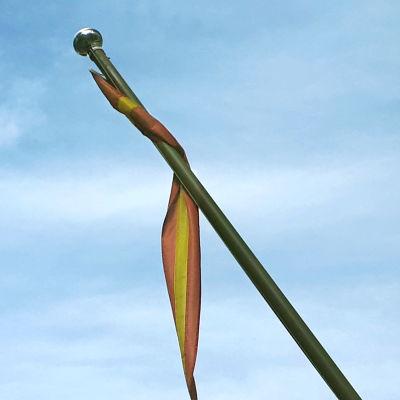 Folktingets flagga i rött och gult, har slagit knut på flaggstången på husfasaden