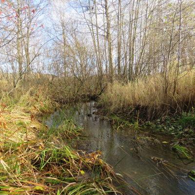 En bäck med mycket brunt höstgräs runt kanterna.