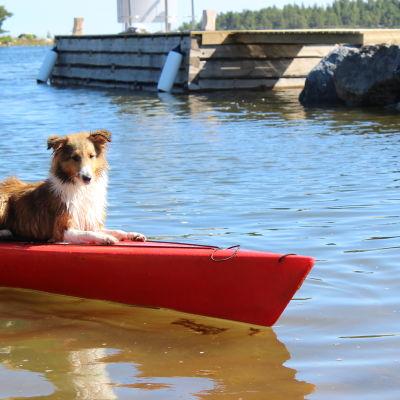 Hund på röd Kajak som flyter nära en brygga.