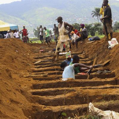 Gravar grävs inför en massbegravning i Freetown.