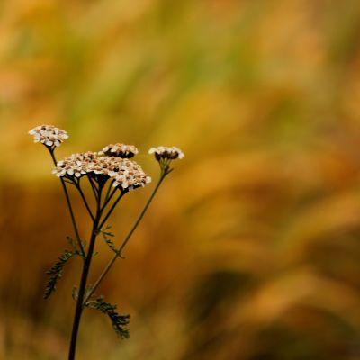 närbild på blomma