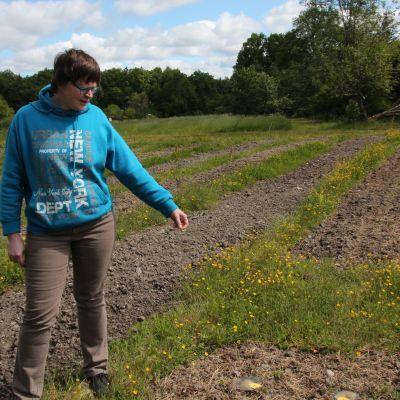 Turun yliopiston kasvitieteellisen puutarhan koepellolla osaan on käytetty glyfosaattia, osaan ei.