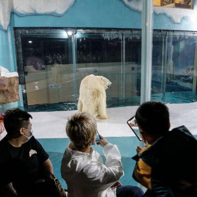 Joukko ihmisiä katsoo ja kuvaa jääkarhua ison ikkunan läpi.