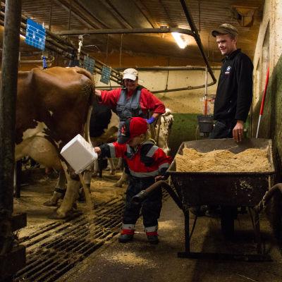 Lilian Eriksson och Andre Suni tittar på när tvåårige Victor hjälper till i fähuset.