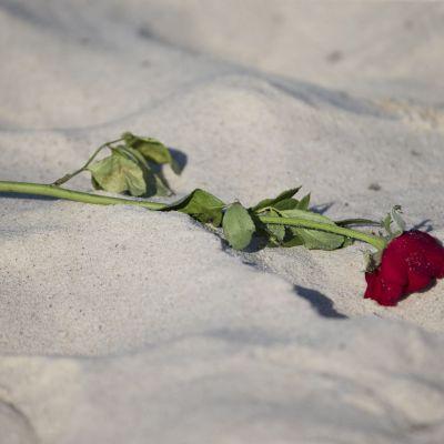 En ros på stranden utanför det hotell i Sousse där en man sköt ihjäl nära 40 personer.