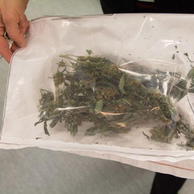 Poliisin takavarikoimaa kannabista Keskusrikospoliisin Rikosteknisessä laboratoriossa.