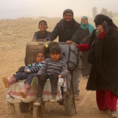 flyktingar från Mosul