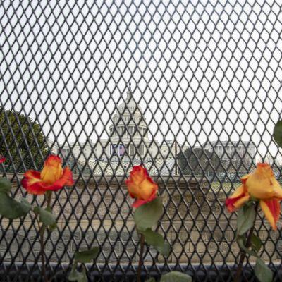Capitoleum syns genom ett finmaskigt stålstängsel. Fem rosor syns framför stängslet.