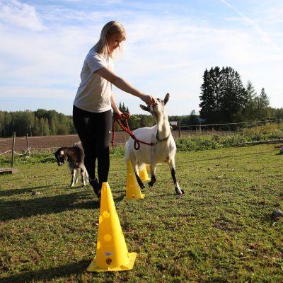 Mikkelissä agilityradalla viihtyvät koirien sijaan vuohet