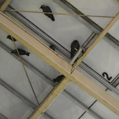 kajor under citymarketgångens tak i borgå