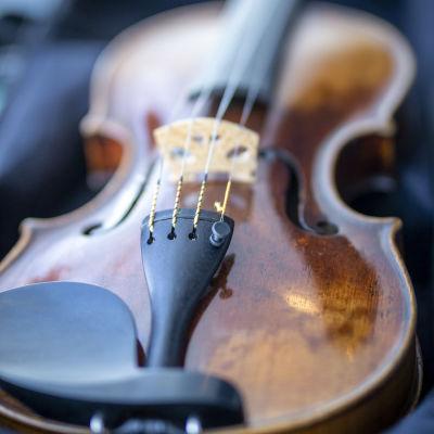 Närbild på Montagnana-violinens stall och strängar.