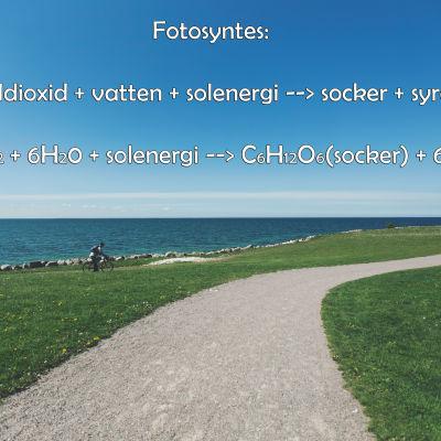 formeln för fotosyntes
