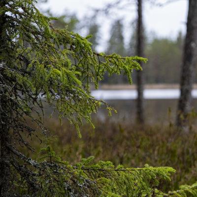 Evon alueella sijaitseva Haukijärvi.