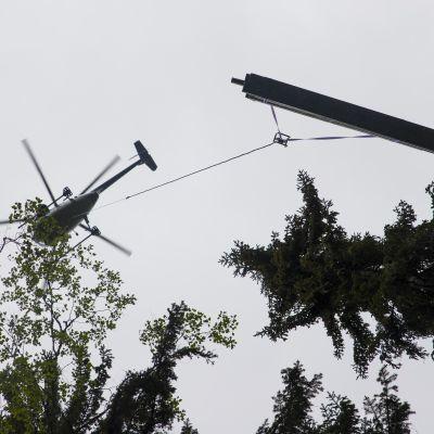 Helikopteri kuljettaa puutavaraa